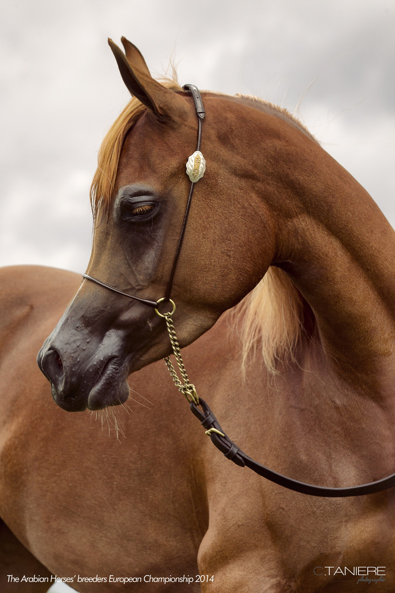 AHO-Breeders-2014-30