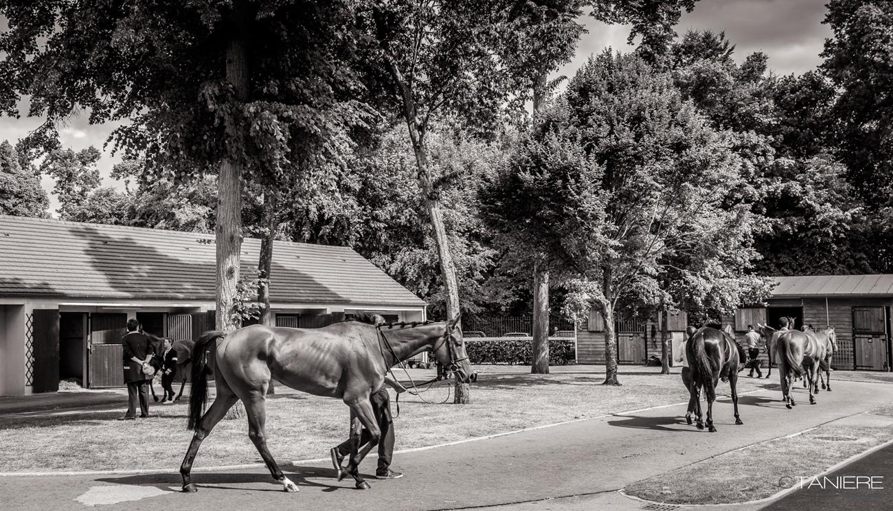 2-cheval box-courses prix de diane