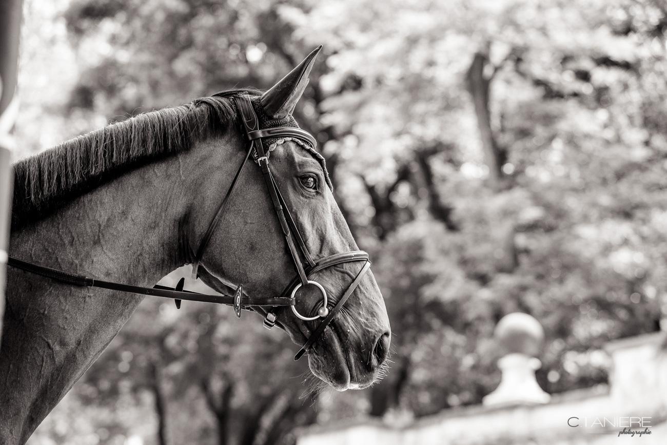 Amazing-Portrait-Horse