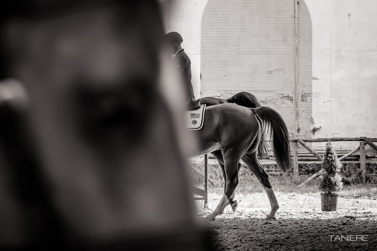 Artistique-equine-Horse