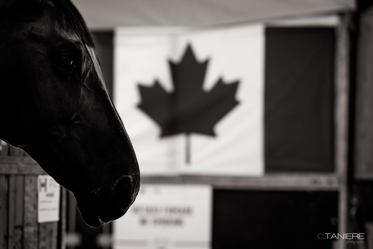 Flag-Canada-Horse