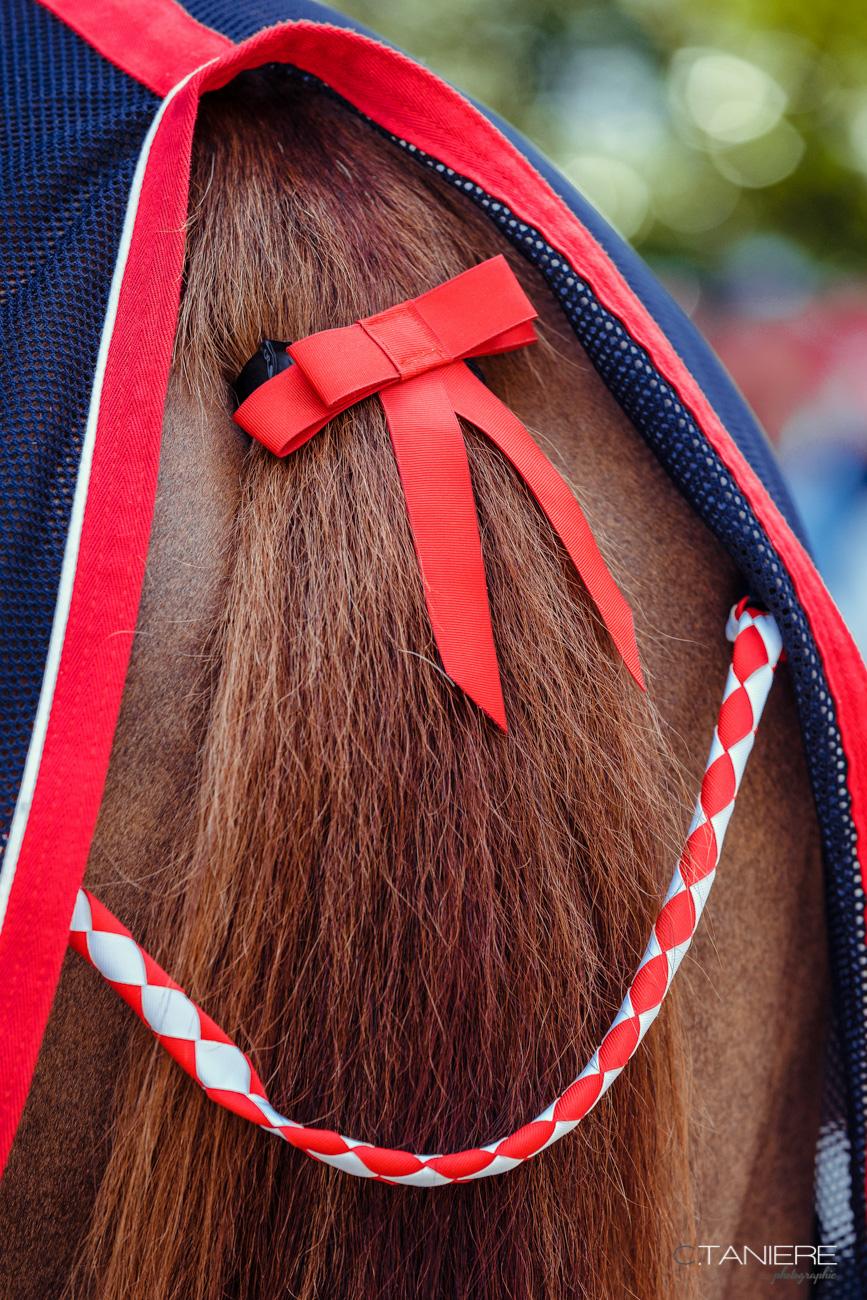 Noeud rouge-Cheval