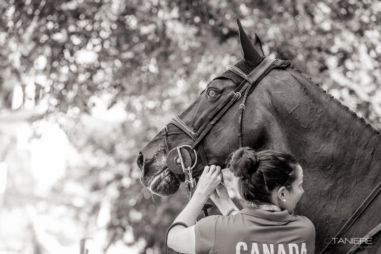 Portrat-Horse-concentration