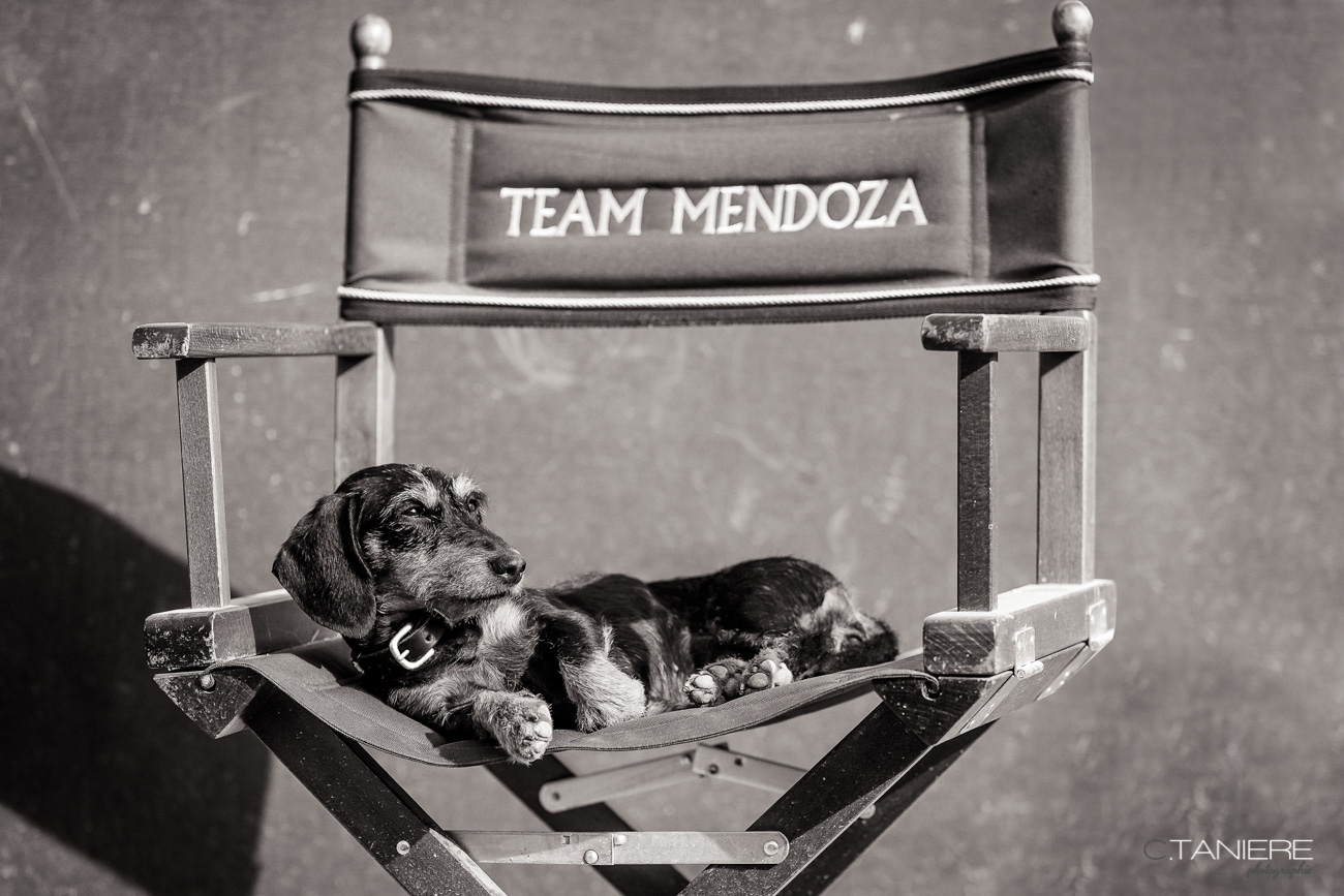 Team-Mendoza-dog-stable