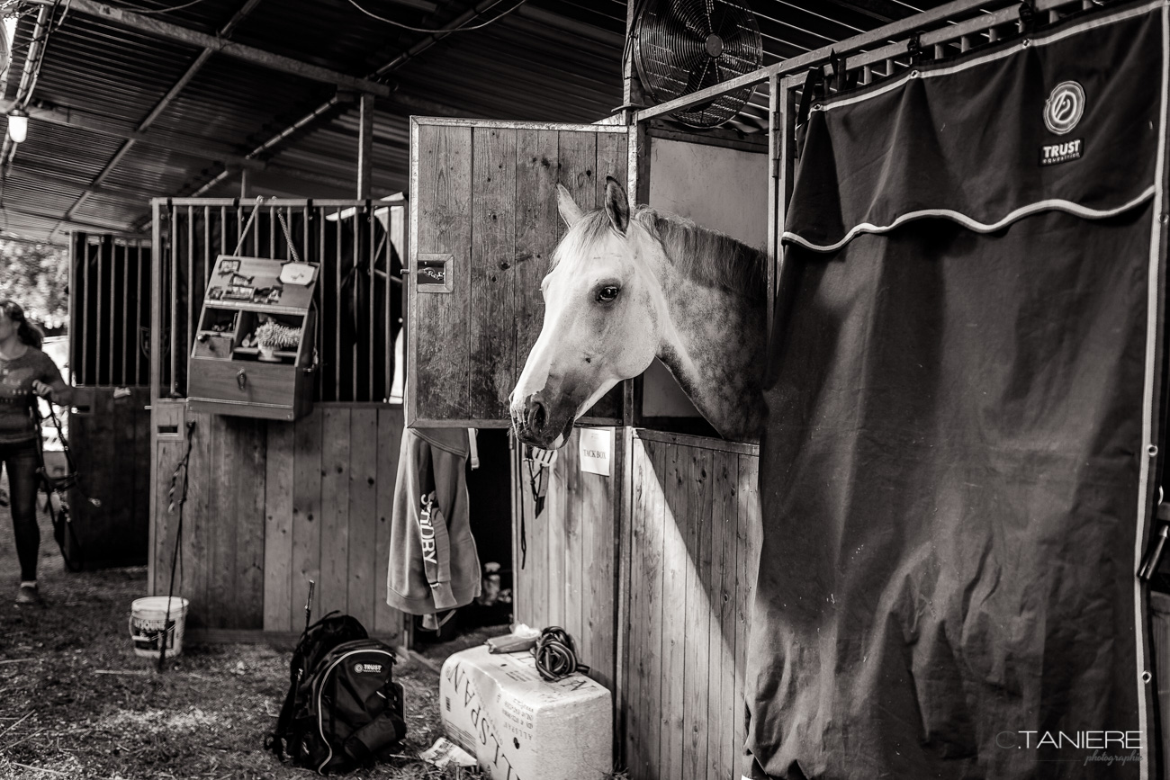White horse-stables